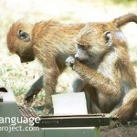 BodyLanguageProjectCom - Anthropology Monkeys Typing