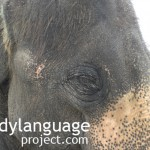 BodyLanguageProjectCom - Zoology